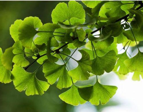 0014 Kvaliteta Zdravil Rastlinskega Izvora